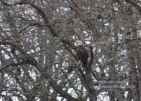 Steider:  Eagles at Balfour Park