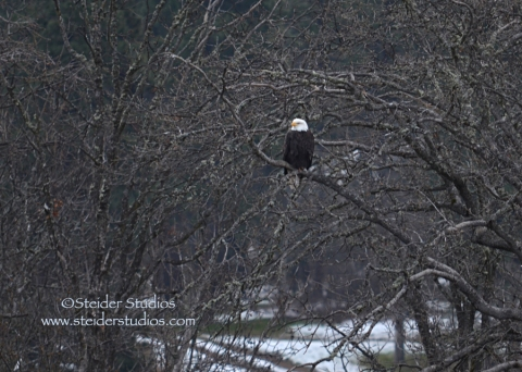 Steider:  At Dark Thirty You Can See Bald Eagles