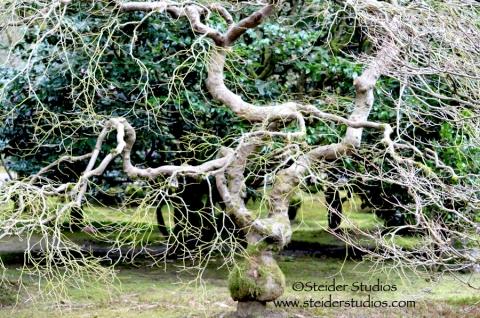 Steider Studios:  Japanese Garden. Tree 2