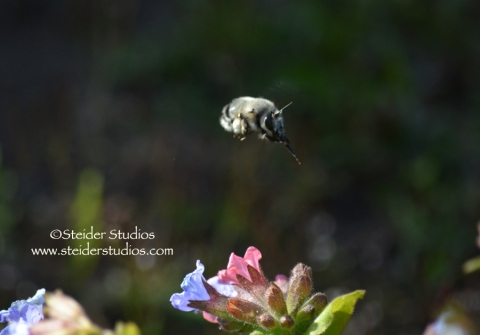Steider Studios:  Bumble Bee in Flight