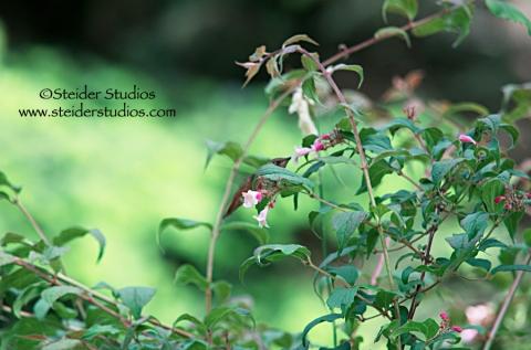 Steider Studios:  Hidden Hummingbird