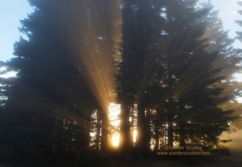 Steider Studios:  Sunbeams through Morning Trees