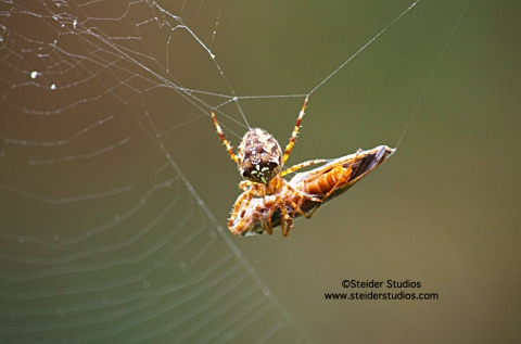 Steider Studios:  Spider Sups at Waterfall