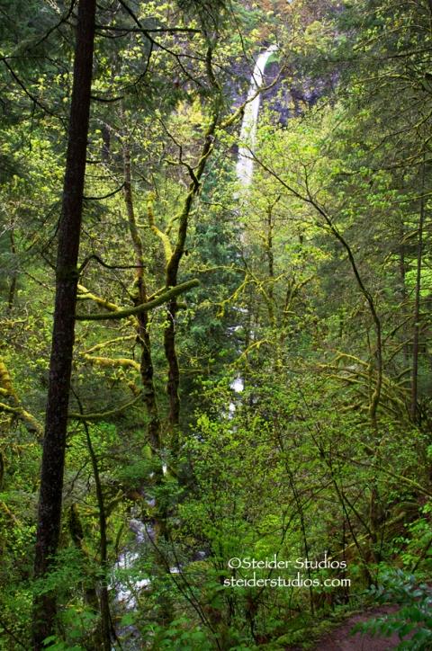 Steider Studios:  Elowah Falls Hiking In