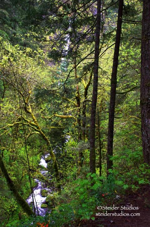 Steider Studios:  Elowah Falls.Hiking Out