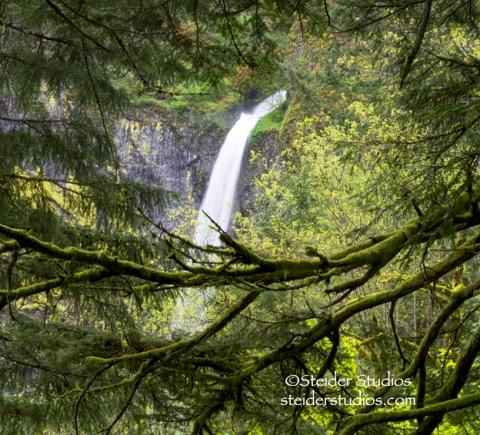 Steider Studios:  Elowah Falls Through Trees.Cropped