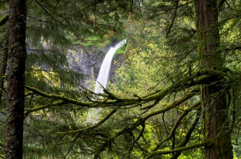 Steider Studios:  Elowah Falls Through Trees