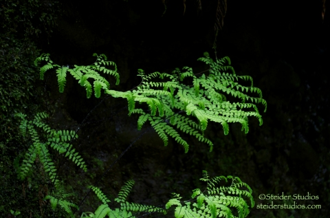 Steider Studios:  Ferns Against Black Rocks