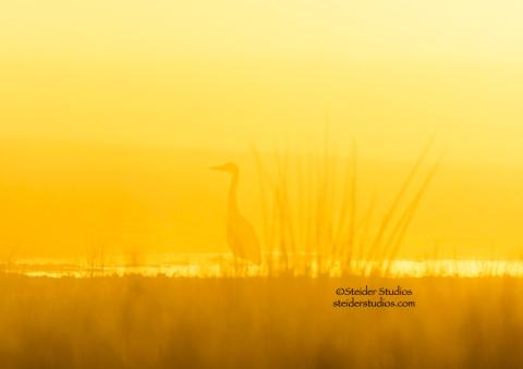 Steider Studios:  Sunrise Silhouette