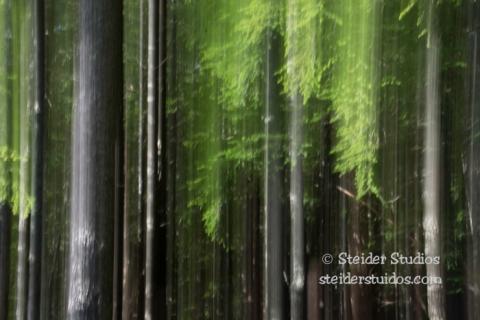 Steider Studios.Forest Experimental Motion Blur