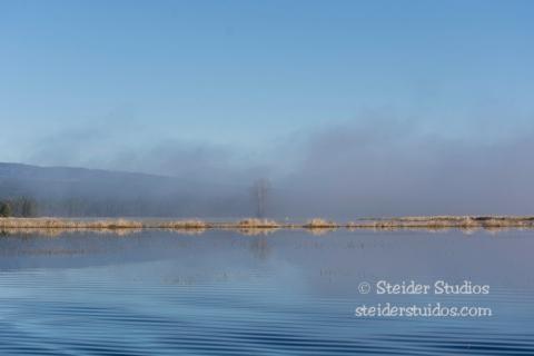 Steider Studios.Conboy Lake Frogs.3.8.15-2