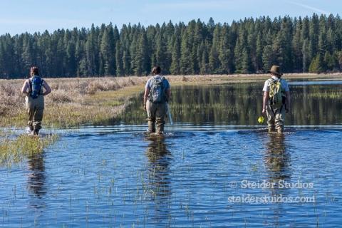 Steider Studios.Conboy Lake Frogs.3.8.15-23