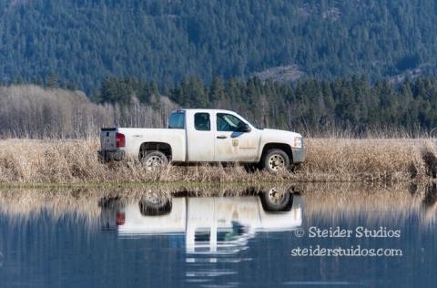 Steider Studios.Conboy Lake Frogs.3.8.15-25