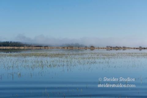 Steider Studios.Conboy Lake Frogs.3.8.15-5