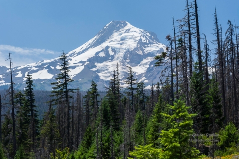 SteiderStudios.Mt Hood from Pinnacle Ridge Trailhead.7.5.15
