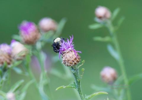 SteiderStudios.Bumble Bee.7.5.15