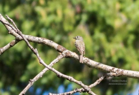 SteiderStudios.BirdWalk.7.5.15