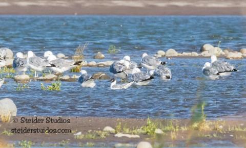 Steider Studios.BirdWalk.8.9.15-3