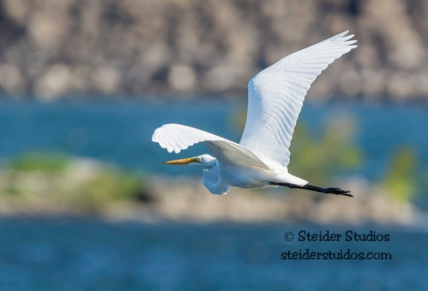 Steider Studios.Bird Walk.TD Waterfront.9.13.15-20