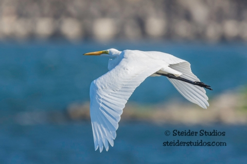 Steider Studios.Bird Walk.TD Waterfront.9.13.15-21