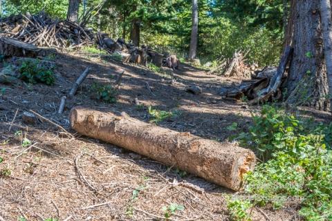 Steider Studios.Wood Project.9.19.15-7