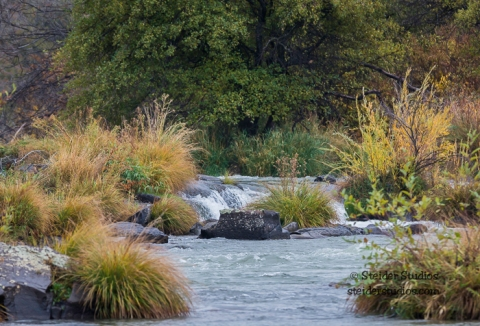 Steider Studios.Otters playing on The Deschutes River
