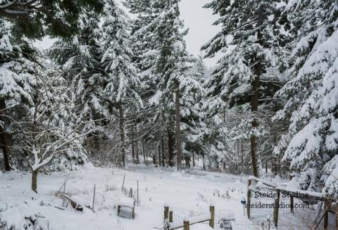 Steider Studios.Snow Day.12.17.15-7
