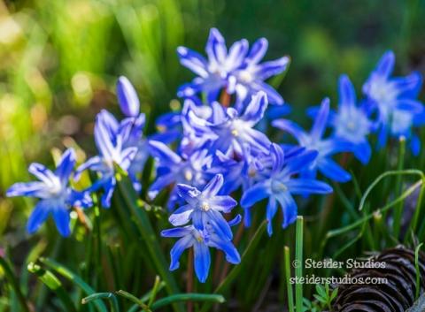 Steider Studios.Garden Flower.3.29.16-5
