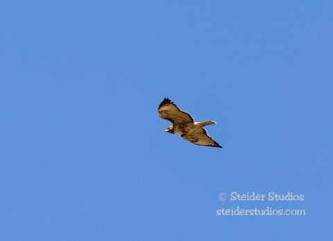 Steider Studios.Klickitat Wildlife.4.8.16-4
