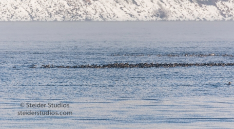 steider-studios-10-raft-of-ducks-12-18-16