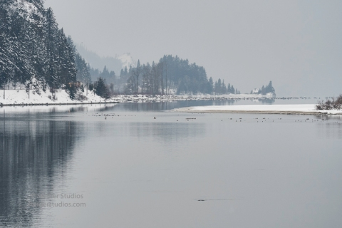 steider-studios-bird-walk-1-15-17-12